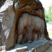 Groupe d'éléphants